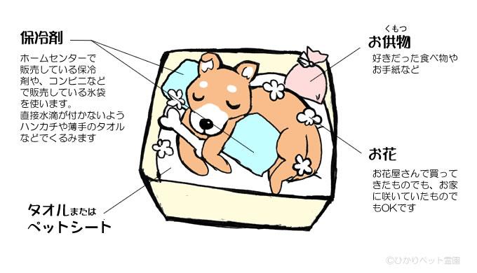 イラスト:安置の方法 段ボール箱やお気に入りのベッドに、タオルやペットシートを敷いて、ハンカチなどで包んだ保冷剤や氷袋で頭とお腹を重点的に冷やします